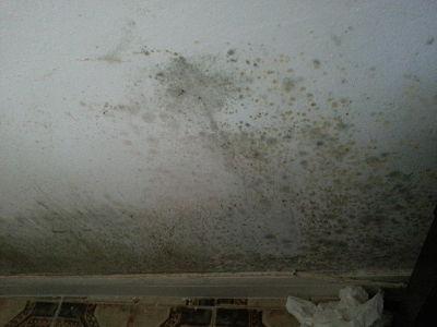 pared negra moho hongos humedad condensacion