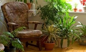 Plantas problema humedad condensacion