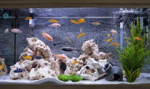 humedad acuario